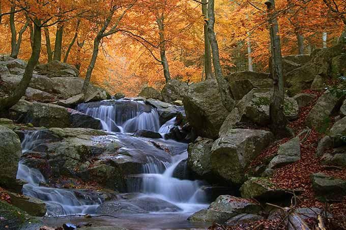Parque Natural del Montseny, Cataluña A poco más de una hora de Barcelona, el Montseny es un gran pulmón verde al que no le da ninguna vergüenza cambiar de piel en cuanto llega otoño. Rápidamente las hojas de las encinas, alcornoques, robles y hayas pasan a los tonos de ocre y, lentamente, tapizan el suelo. Por la belleza de sus paisajes y por su variedad de rutas senderistas y rincones con encanto, no deberías perdértelo si estás en la zona.