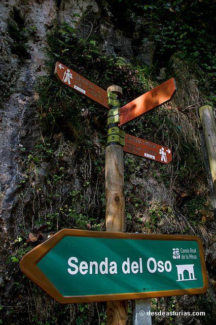 Rutas Asturias: Senda del Oso by desdeasturias.com, via Flickr