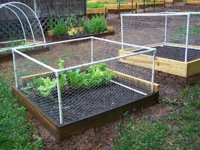 Fence design to keep out small critters from the garden! I am trying this next for my strawberry patch, only with a cover as well to keep out the squirrels.
