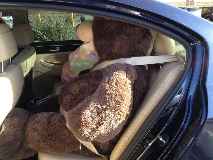 """Beary happy he's not in trunk"" by Think Tank member Albert P."