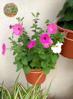 backyard designs – Gardening Ideas, Tips & Techniques Petunias, Plantar, Kids Room, Planter Pots, Backyard, Pure Products, Make It Yourself, Barbacoa, Flower Pots