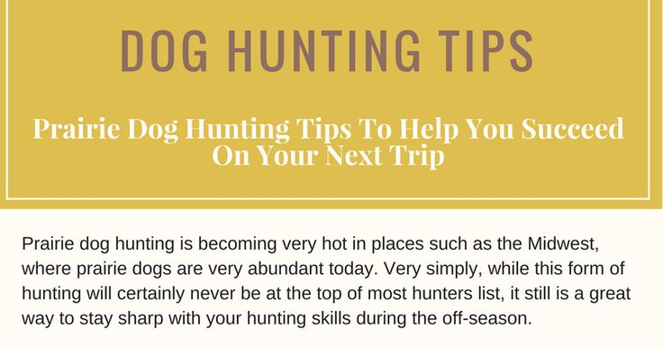 Prairie Dog Hunting Tips To Help You Succeed On Your Next Trip        Related Post:  Top 10 TIPS FOR NEW DOG OWNERS