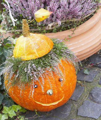 Halloween pumpkin with hair of the calluna flowers