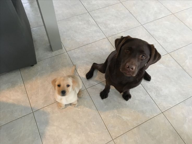 Luna and Sunny
