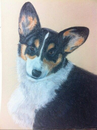 Don't you just love a Corgi's ears.  Polychromo pencil drawing