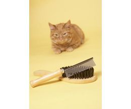 The Best Flea Treatment For Cats | eHow
