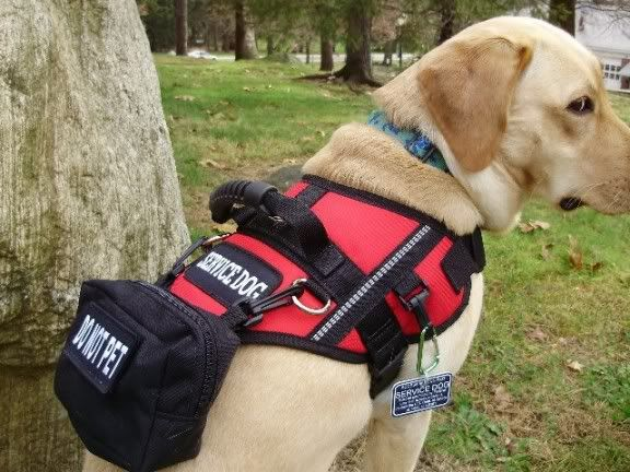 Official Service Dog Vest Xl
