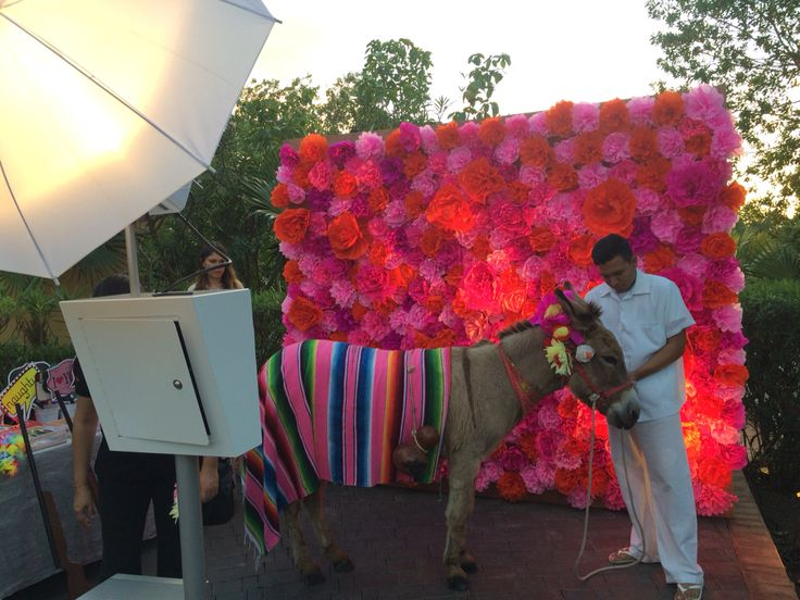 Pancho (the donkey) at the photobooth, amazing idea!!!.. Great and unforgettable welcoming to your Guests!!!
