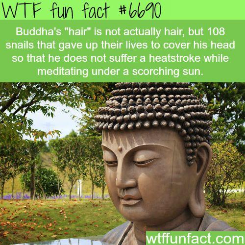 Buddha's hair - WTF fun fact