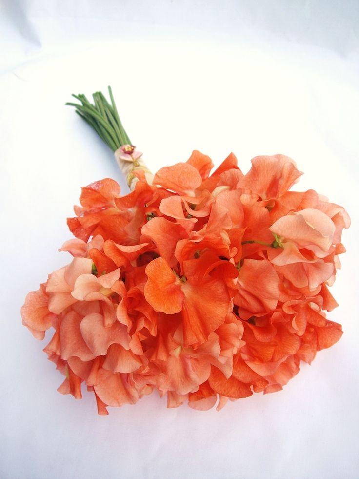 Best 25 Sweet Pea Wedding Bouquet Ideas On Pinterest