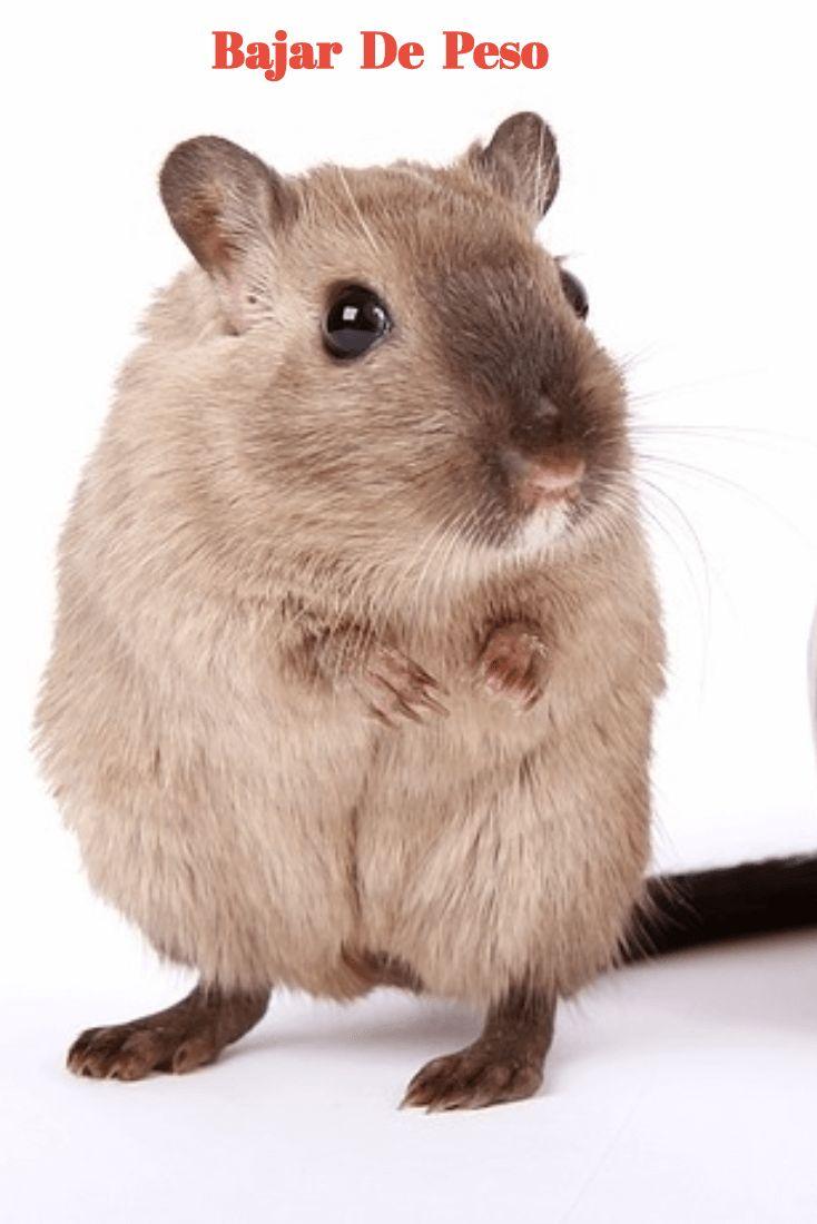 Vive bien, come sano,  baja de peso.