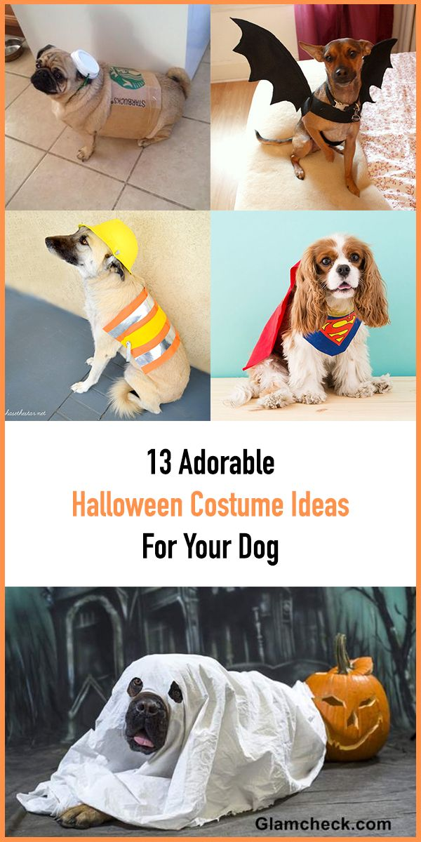 13 Adorable Halloween Costume Ideas For Your Dog in 2020