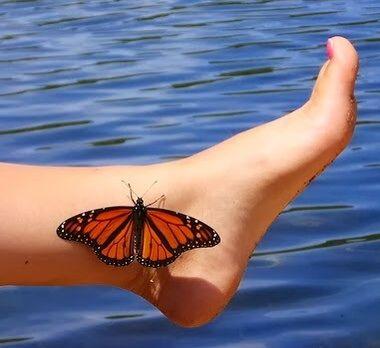 83 best butterfly buddies evil enemies images on pinterest butterflies butterfly and enemies. Black Bedroom Furniture Sets. Home Design Ideas