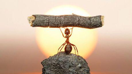 Mot clés : insectes, fourmis, 20 choses elle répond à nos informations car l'article parle bien de la fourmis  extrait d'un article du site maxiscience   c'est une personne réel qui s'appelle baptiste rouch en formation EICAR l'article est du 5 aout 2014  donc récent