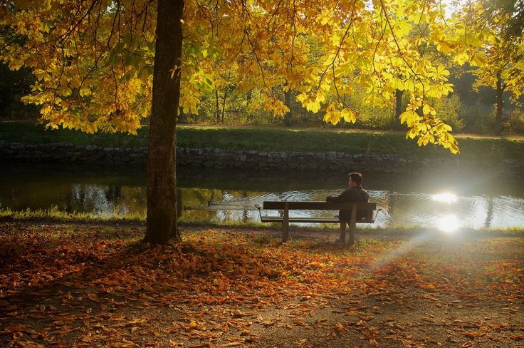#autumn #stockholm #sweden #travel #travelling #traveller #perjalanan #wisata #autumnleaves http://lactobacillust.blogspot.co.id/