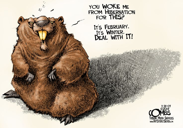 Exotic Animal Wallpaper Paul Combs Political Cartoons Groundhog Day Here S An