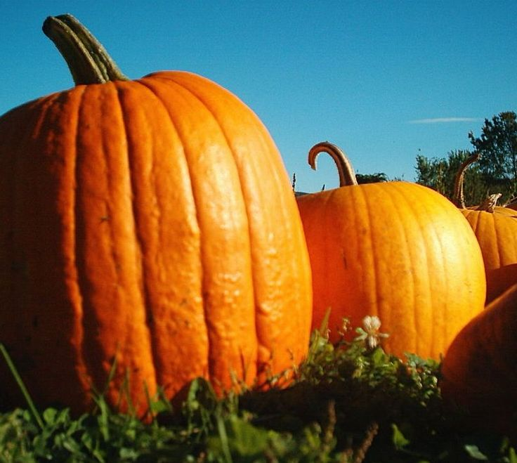 Lexington makes the list! | 15 Cities With Family-Friendly Activities for Halloween 2014 via @petergreenberg