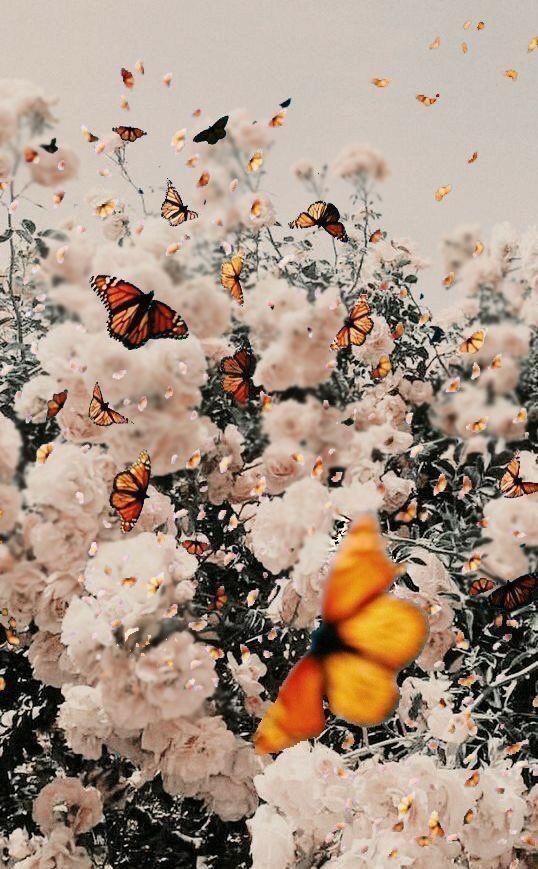 laarenn in 2020 butterfly wallpaper iphone