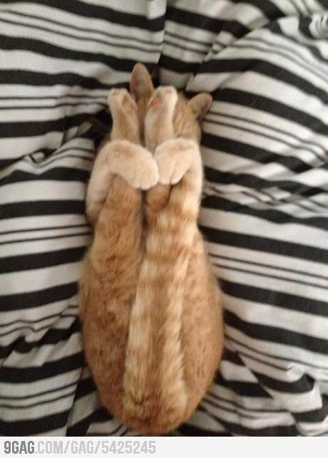 'In this Yoga Cat class we will learn how to stretch , lift your back paws ....... ! '