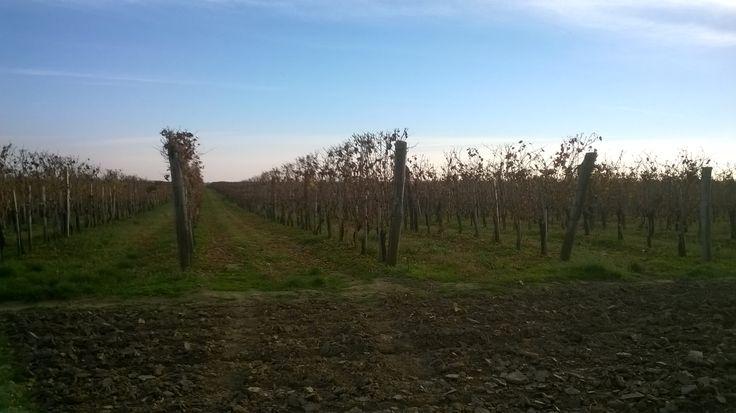 Báta, Szekszárd wine region