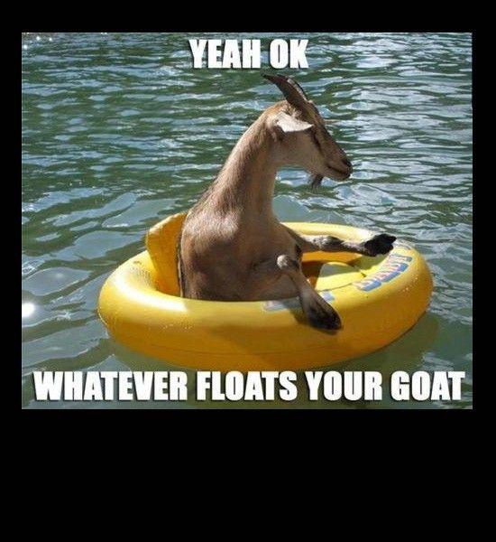Funny Photos, Goat Floats