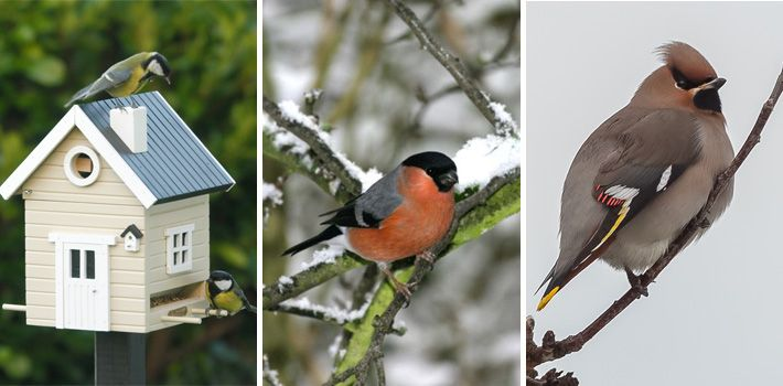 Så lockar du småfåglar till trädgården - Byggahus.se