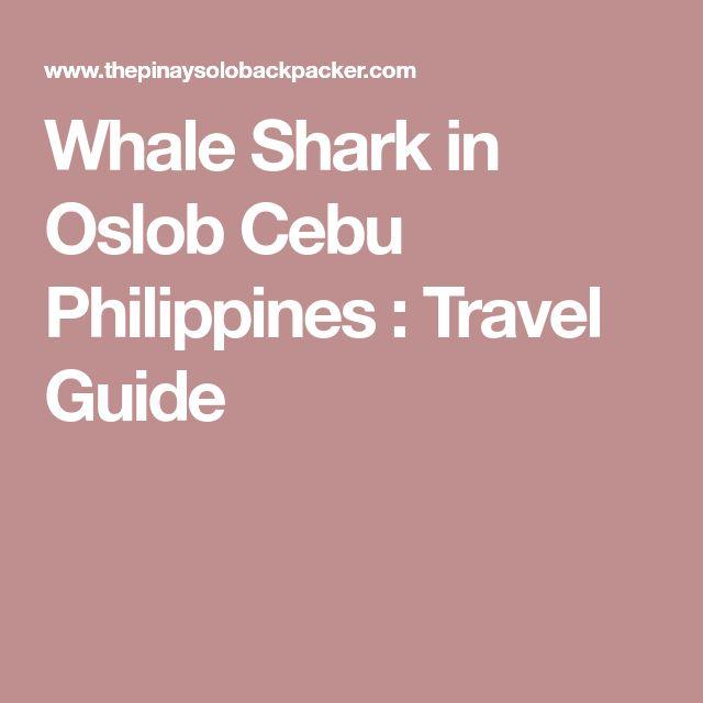 Whale Shark in Oslob Cebu Philippines : Travel Guide