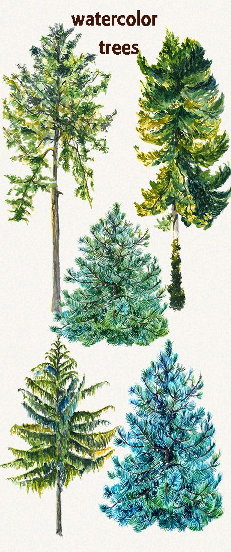 9.23$ tree clipart. green tree clipart, watercolor trees, fir clipart, fir tree clipart, clip art, Hand Painted, trees clip art, digital watercolor