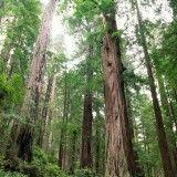 El Día Forestal Mundial (World Forestry Day) se celebra todos los años el 21 de Marzo. Es importante para esta fecha destacar que todos los tipos de bosques proveen a los pueblos del mundo de bienes y servicios esenciales, sociales, económicos y ambientales, y contribuyen a la seguridad alimentaria, agua y aire limpios y protección del suelo, y que su manejo sostenible es fundamental para lograr un desarrollo sostenible.