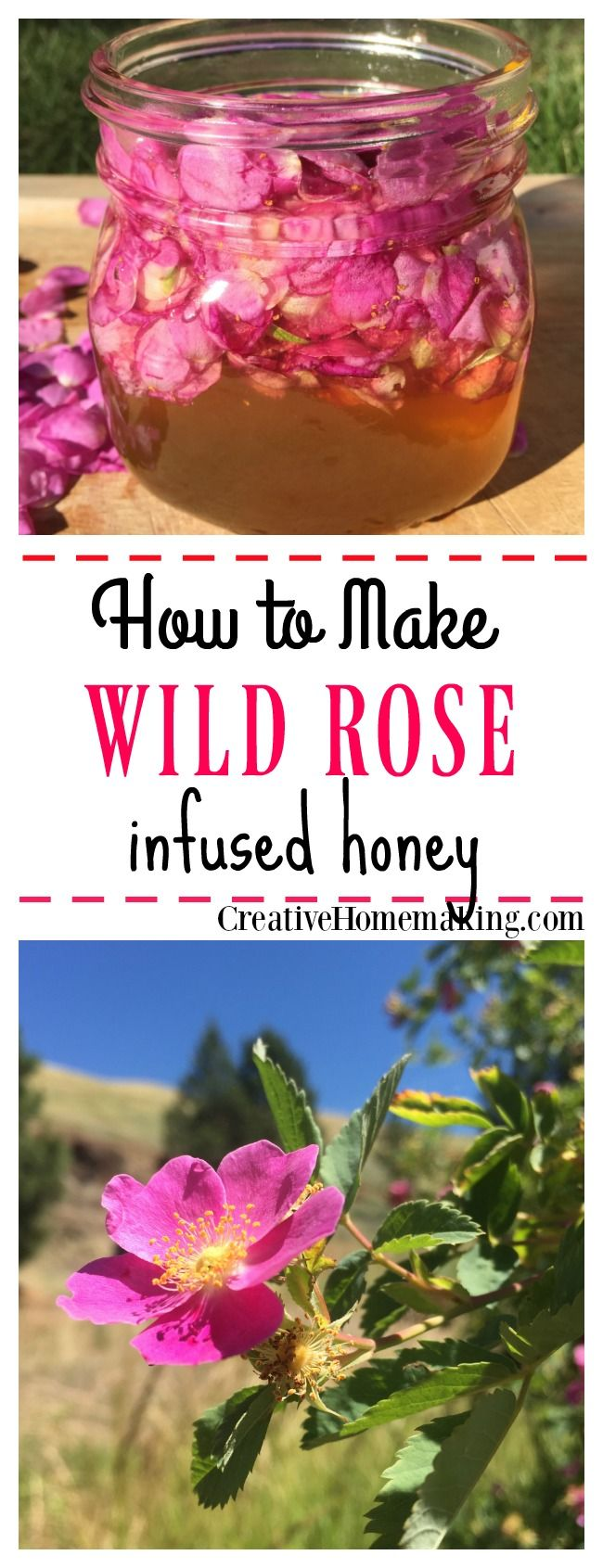 If you have an abundance of wild roses, try this easy wild rose infused honey recipe. Lightly flavored and scented, this gourmet honey makes a great gift idea for family and friends!