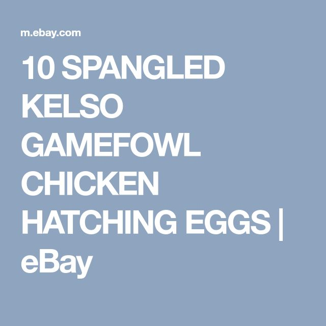 Johnny jumper Spangled Kelso gamefowl