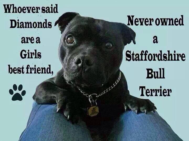 Staffies are better than diamonds any day #StaffordshireBullTerrier I love my Dennis x and poor mutely in doggy heaven xx