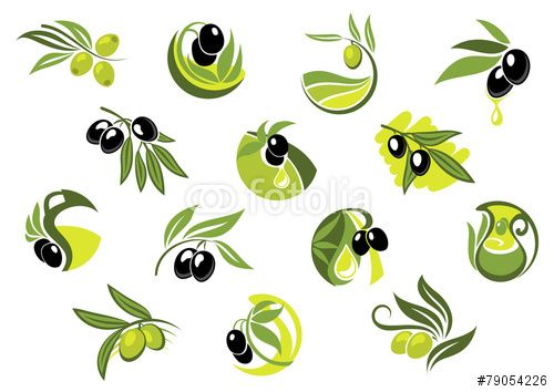 Вектор: Olive tree branches with glossy olives