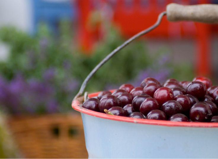 Cherries from the Vineyard.