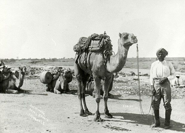 Thousands of Afghani and Pakistani cameleers played an important role in shaping the Australian outback.