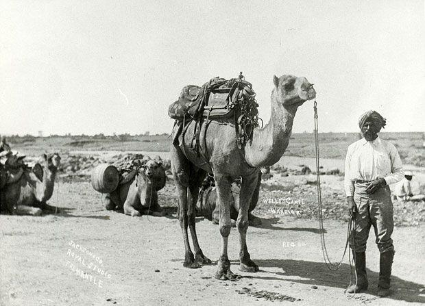 Australia's Afghan cameleers - Australian Geographic