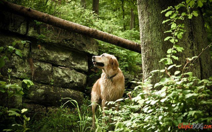 Photo d'énormes chiens amicaux