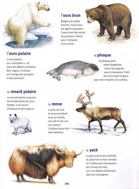 Quelques animaux des pays froids french learning - Animaux pole nord ...