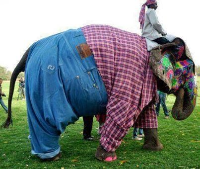 ELEPHANT GOING FOR FANCY SHOW FUNNY IMAGES - Image Gallery, Actress, Wallpapers, Photo messages, Mobile Messages, Nice Quotes