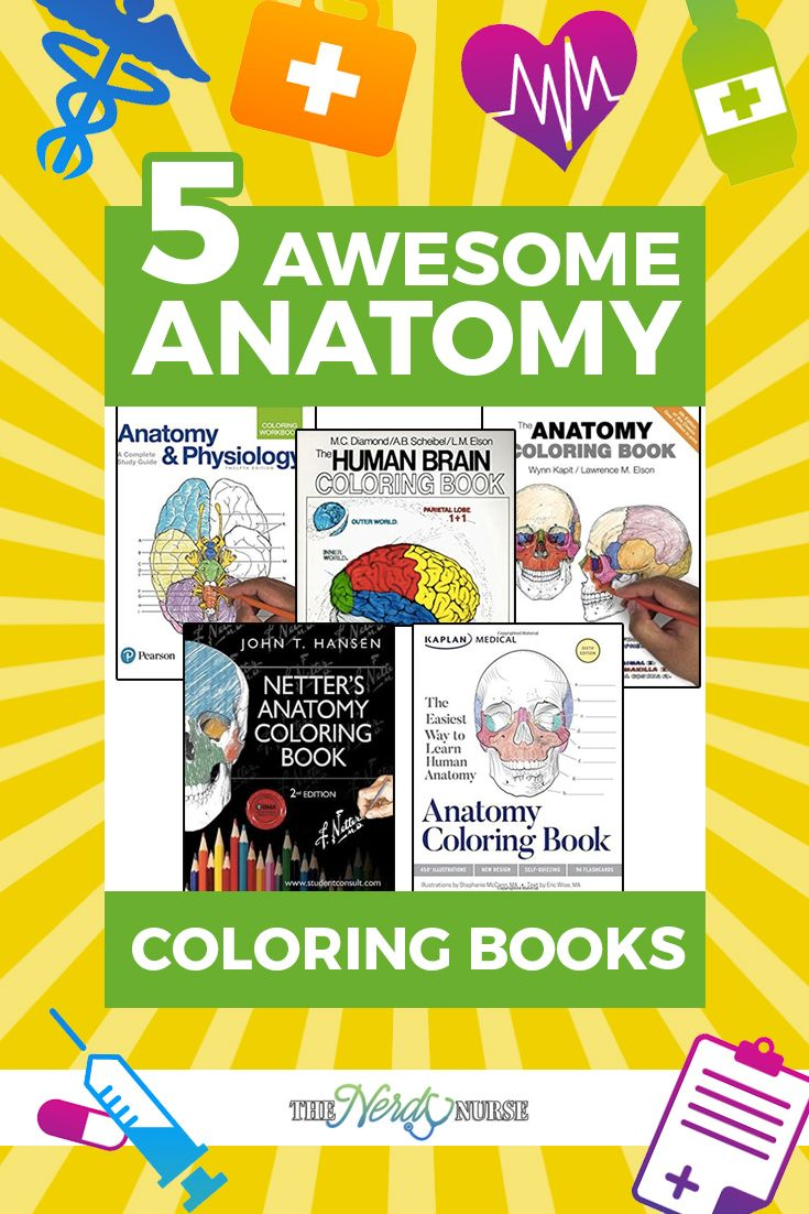 192 best anatomy u0026 nursing study tools images on pinterest
