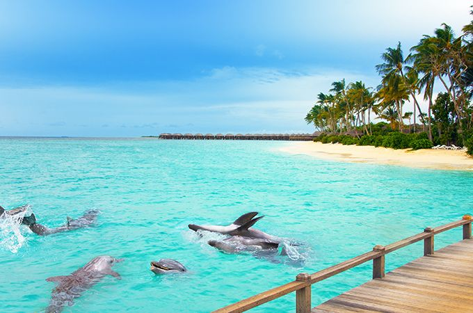 Find amazing scenery and wildlife in the Maldives