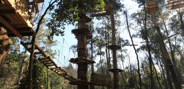 Trees Adventure - Trees Adventure is a new, exhilarating eco-adventure in the Dandenongs. It comprises five tree-top obstacle and flying fox courses that weave through the sublime canopy of Glen Harrow heritage gardens.
