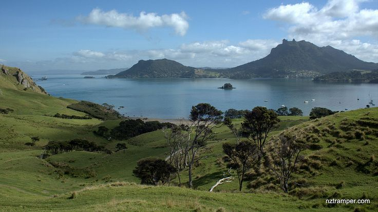 Bream Head Track New Zealand