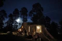 Spend the night in a tree stump, Norrqvarn, Sweden