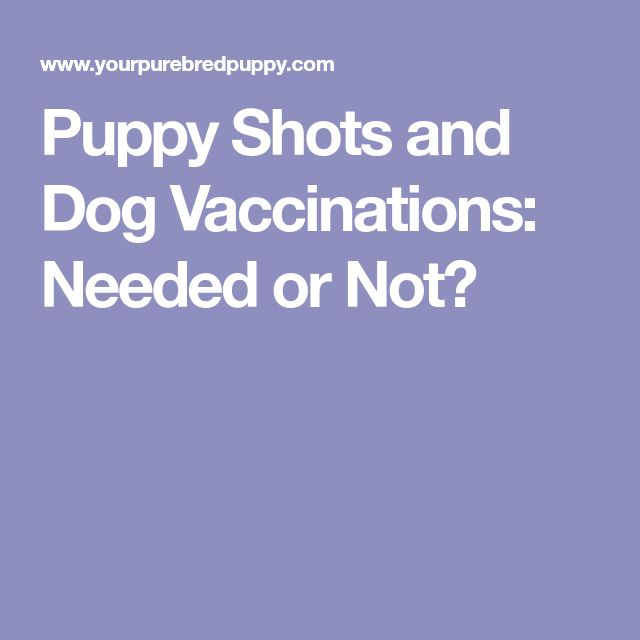 Puppy Shots and Dog Vaccinations: Needed or Not?