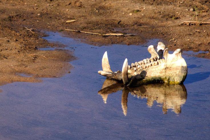 The memory of a hippo