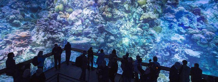 Un increíble Panorama de La Gran Barrera de Coral - wazogate.com
