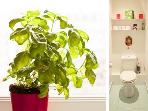 12 best Les plus belles toilettes de France ! images on Pinterest - location studio meuble ile de france