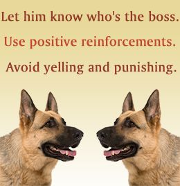 German shepherd training tips - Yes, Kind and gentle, but firm.  They will respect you and love you.