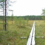 Siikanevan pitkospuut